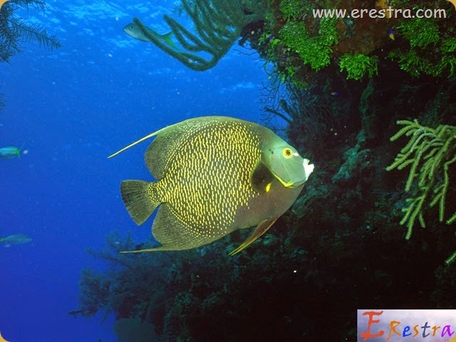 Underwater Wallpaper (143)