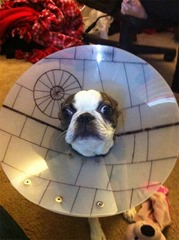 star-wars-dog-cone[1]