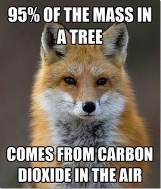 fox-facts-meme-6