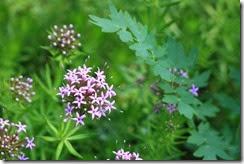 nybg-new-york-botanic-gardens-bronx-001