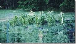 fenced garden 2a