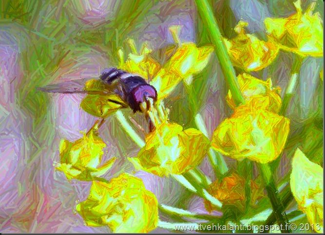 sunnuntain ötökkä kuvat outo perhonen toukka 143