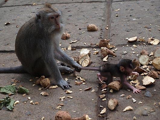 primitive-child-leash-denpasar