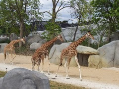 2014.04.21-012 girafes