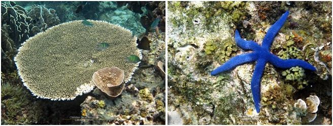 Marine Life Under Banton, Romblon