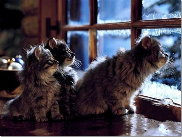 cats and kittens - 1thy656