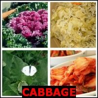 CABBAGE- Whats The Word Answers