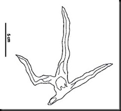 archaeonithipus.vidarte.1996.coppy