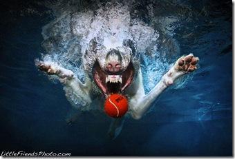 caine prinde mingea in apa