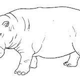 animales salvajes 10.jpg
