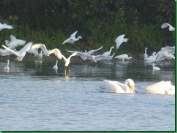 Eco Pond 022
