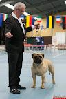 20130511-BMCN-Bullmastiff-Championship-Clubmatch-1676.jpg