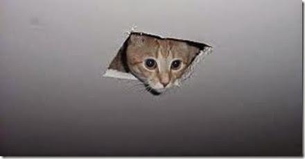 spycat