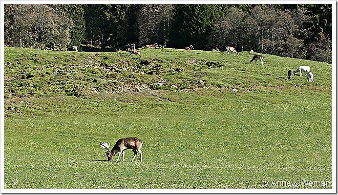 2011_10_30_059_WildparkAurich