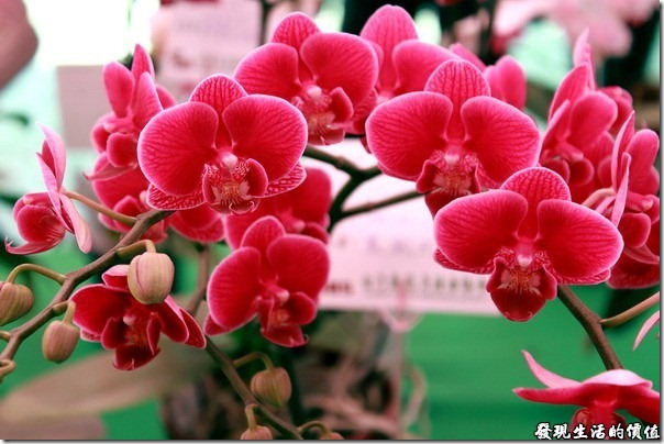 2012台南蘭花展15