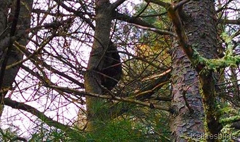 4. 5-4-14 porkie climbing tree trunk