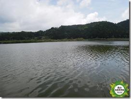 B雙連埤-湖面 浮島