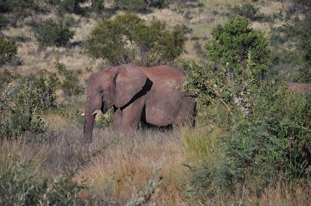 5. safari Africa de Sud.JPG