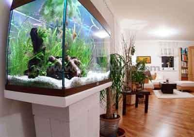 ฮวงจุ้ย,ตู้ปลาตั้งไว้ห้องรับแขกสร้างความสุขสมบูรณ์