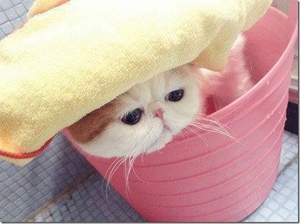 gato tomando banho (1)