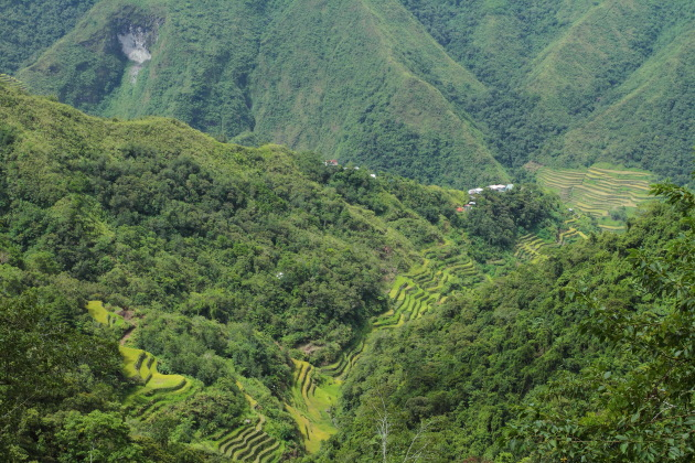 Batad Rice Terraces surrounded by lush green tropical forests
