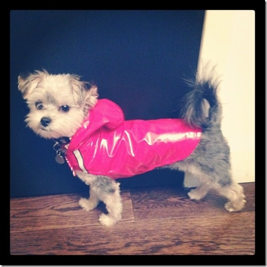 hurricane-sandy-dogs-12