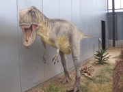 2008.09.05-011 Tarascosaurus