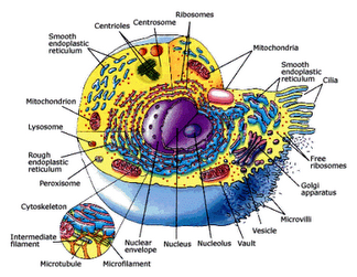 NEET Biology MCQ – Cell Structure and Function ~ NEET Biology ...