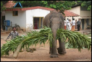 Kerelan Elephant