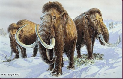 Mammuthus primigenius, woolly mammoth