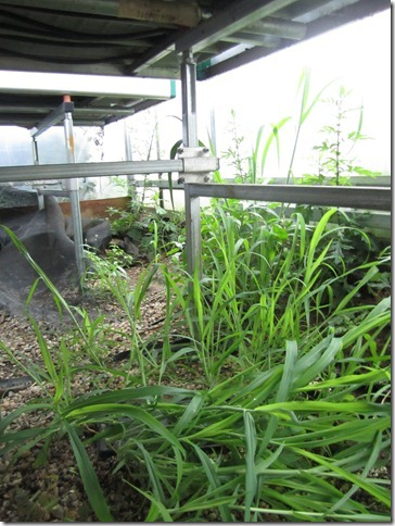garden of eve 019