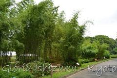 Glória Ishizaka -   Kyoto Botanical Garden 2012 - 94
