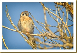 - kESTREL_ROT6892 February 17, 2012 NIKON D3S