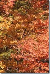 2014-10-26 Oct 26 043