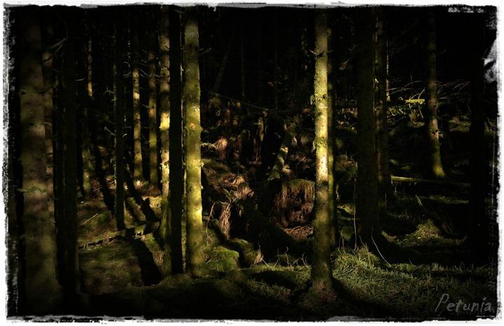 Trollet i skogen Norwegian Troll