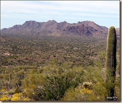 Little Ajo Mountains to the north