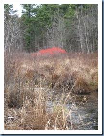 20111118_larose-forest_007