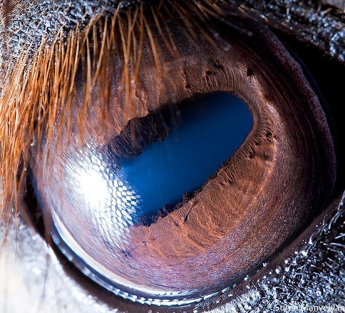 animal-eyes-17