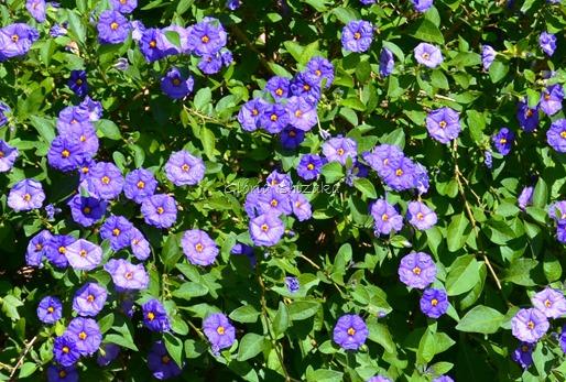 Azul - Glória Ishizaka 1