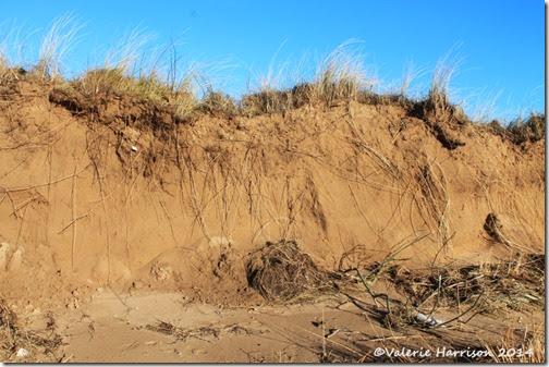 20-damaged-dunes