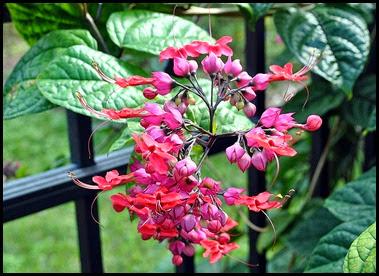 04f - Flowers in the Rose Garden
