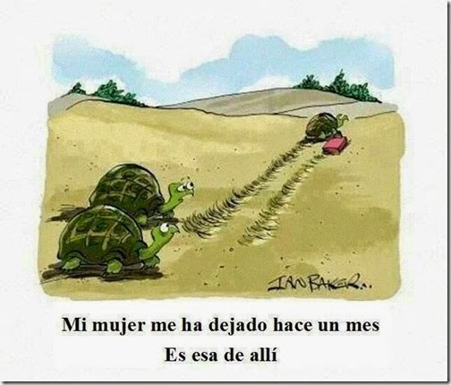humor tortugas (49)