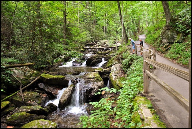 25d2 - Anna Ruby Falls Trail - Path goes up along the creek flowing down