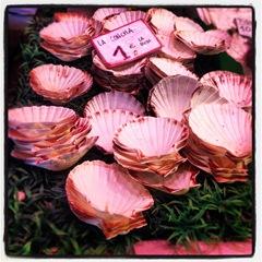 scallop shells at la Boqueria