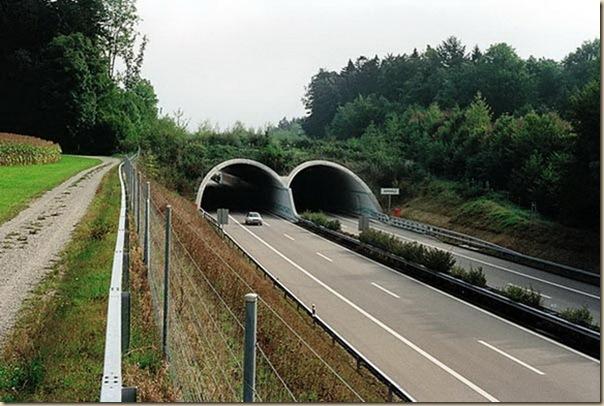 Ponts pour animaux - passages à faune