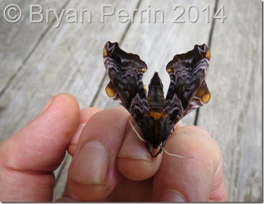 Momenary Moth Meeting