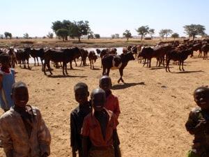 Niger ninos guardando ganado