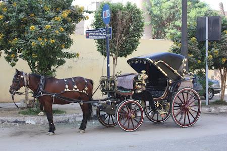 Plimbare cu caleasca in Cairo