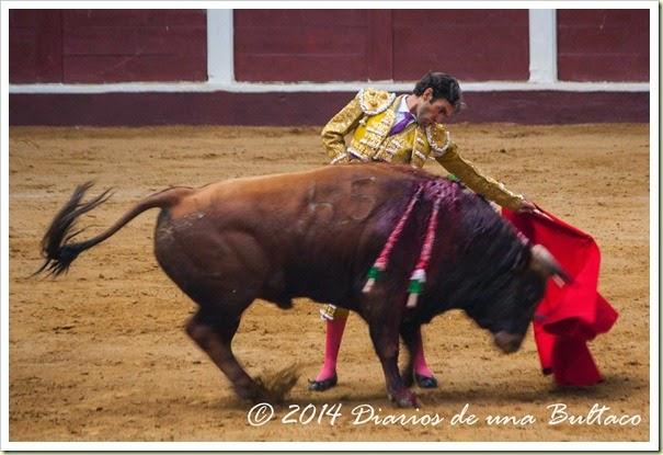 Toros 2014 (2)-27