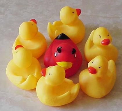 contrast duck